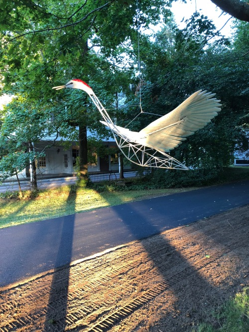 091418-sandhill-crane-at-dusk