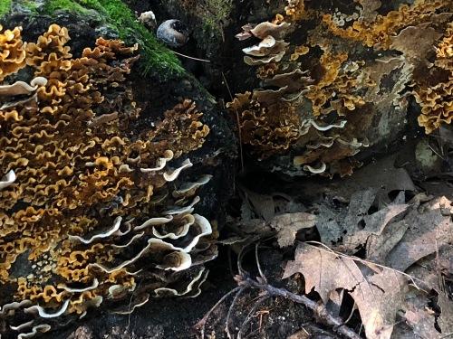091618-fantastic-fungus
