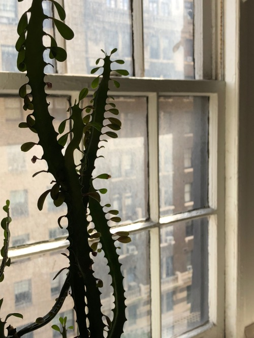 102418-cactus-NYC-window