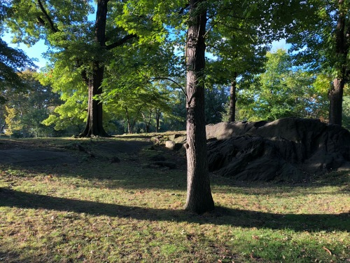 102418-morning-shadows-Central-Park