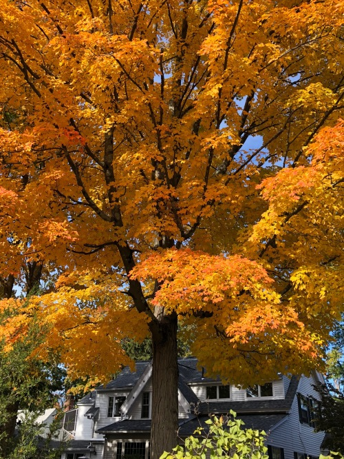 102618-fall-color-Concord-Mass