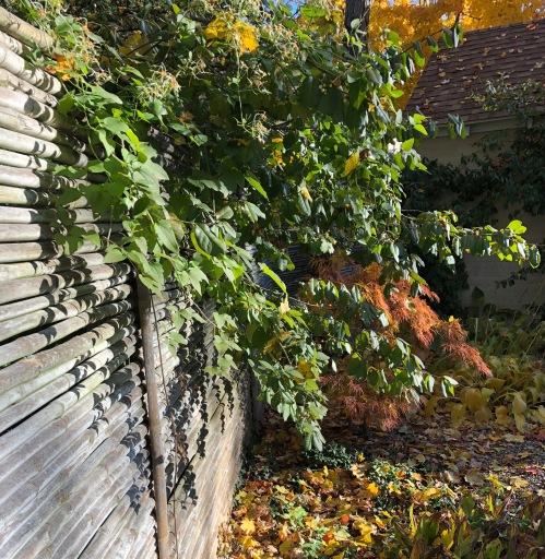 103118-autumn-shadows