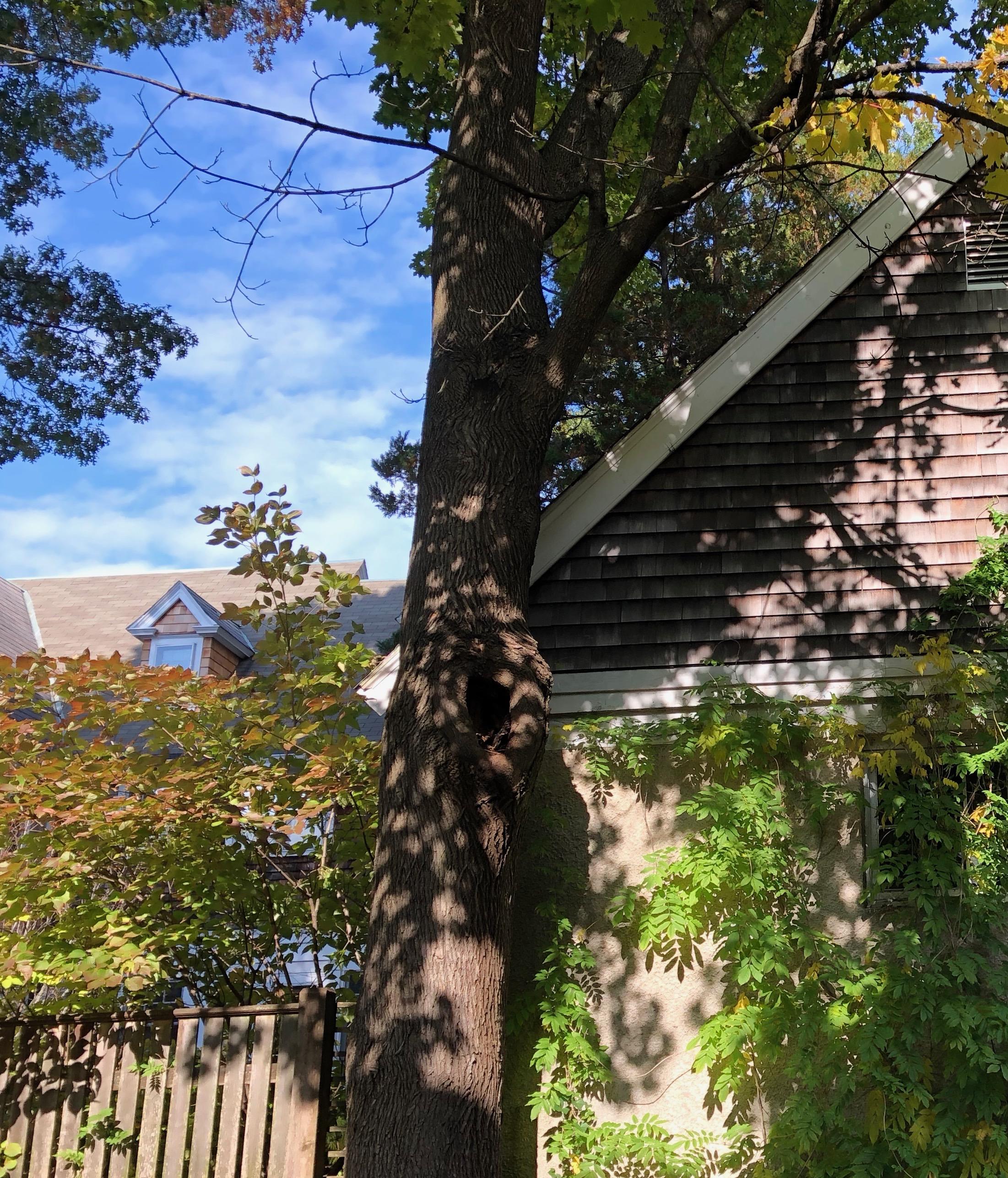 110118-Providence-backyard