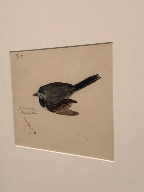 112118-af-Klint-bird