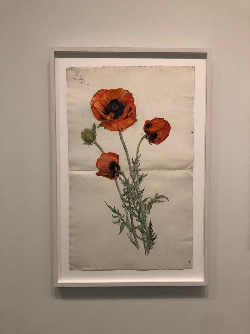112118-af-Klint-poppy
