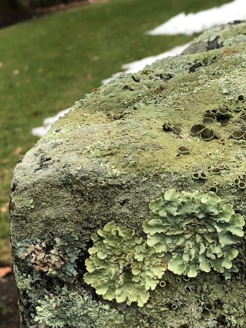 112518-love-of-lichens