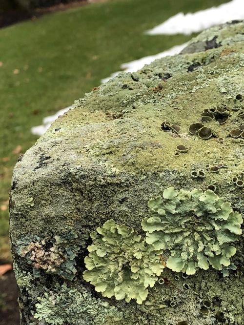 112518-love-of-lichens