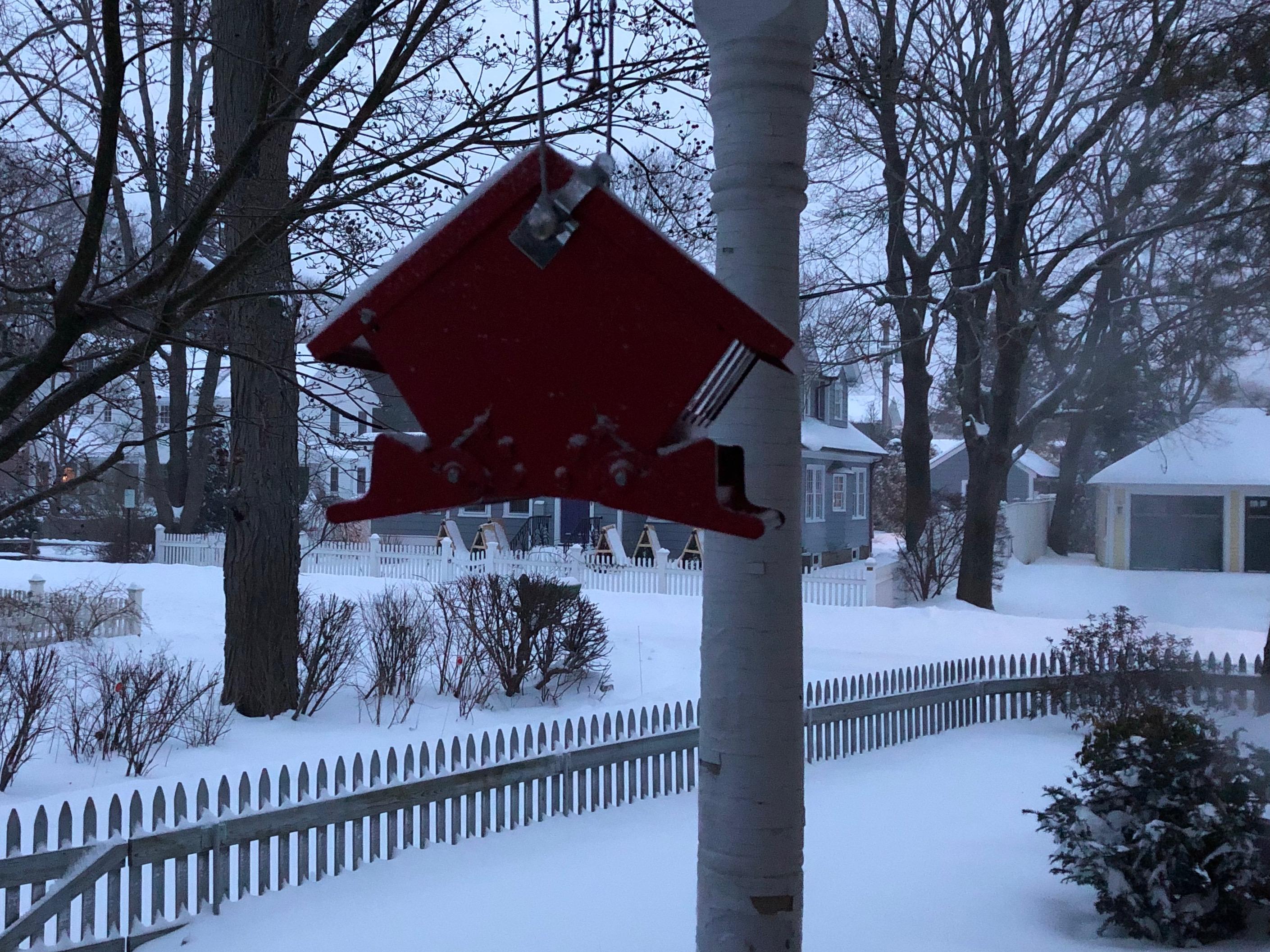 012019-bird-feeder-in-blue-dawn-snow