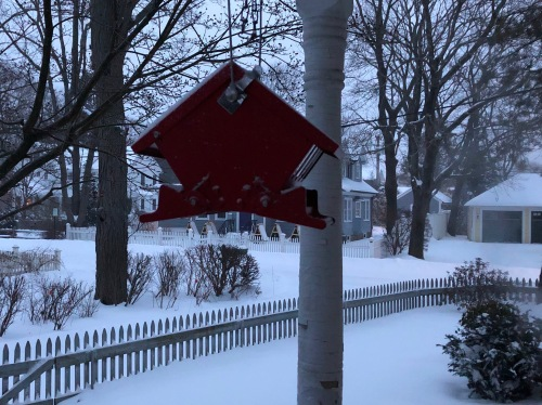 012019-bird-feeder-in-blue-dawn-snow