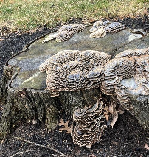 123118-fungus