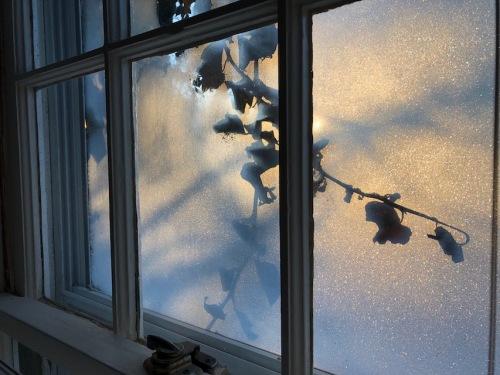 013119-frost-ivy-window-dawn