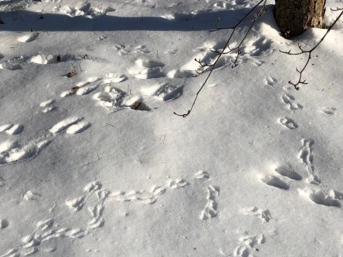 020119-bird-tracks-in-snow