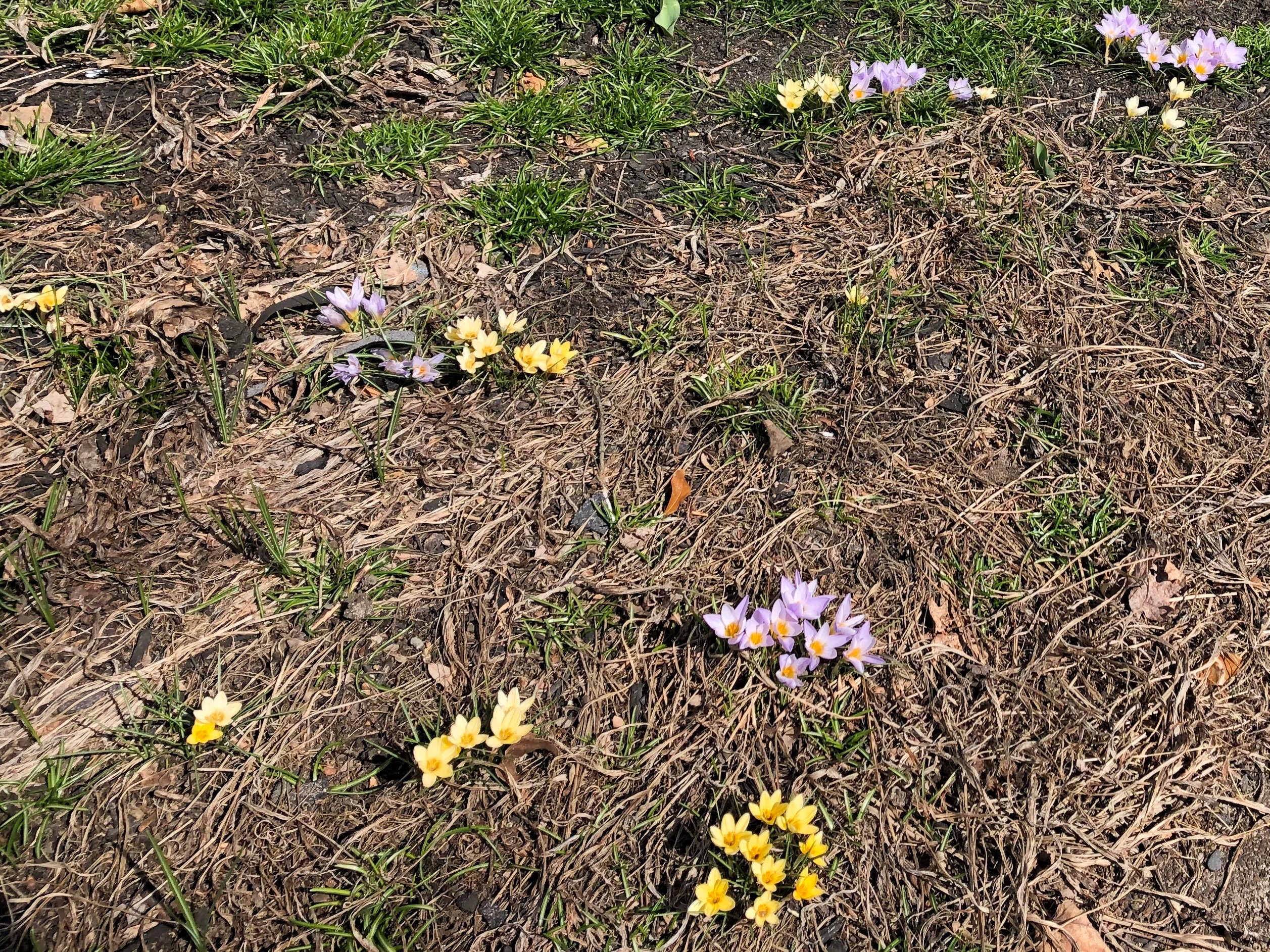032019-early-sign-of-spring