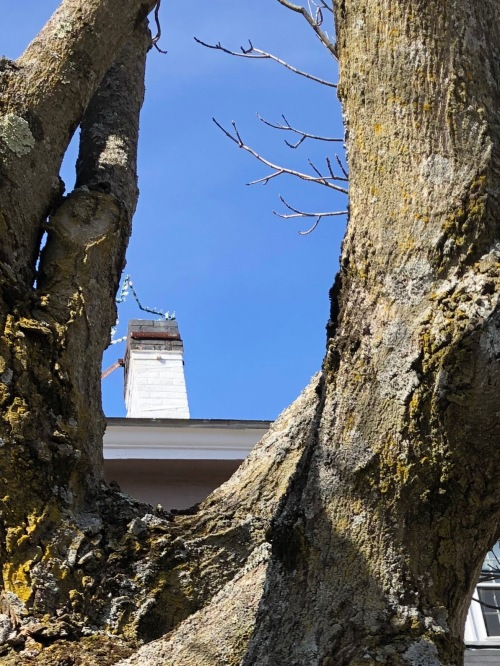 032819-Colonial-Inn-Chimney-and-lichen