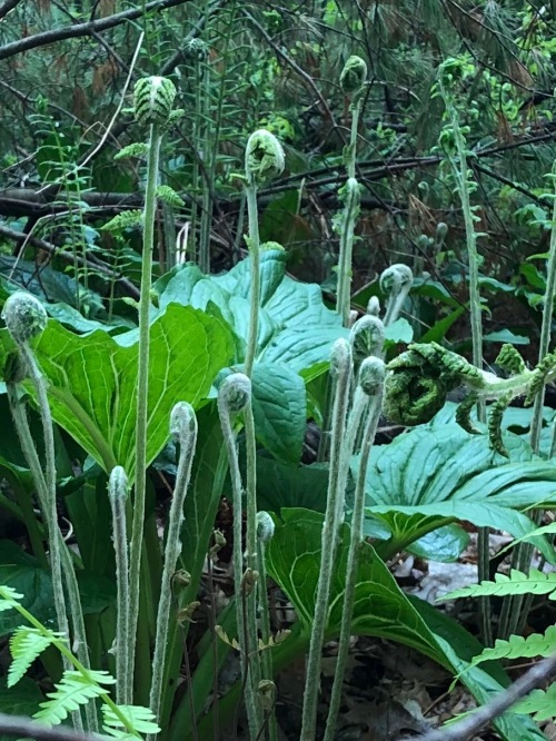 052019-ferns-on-conservation-land