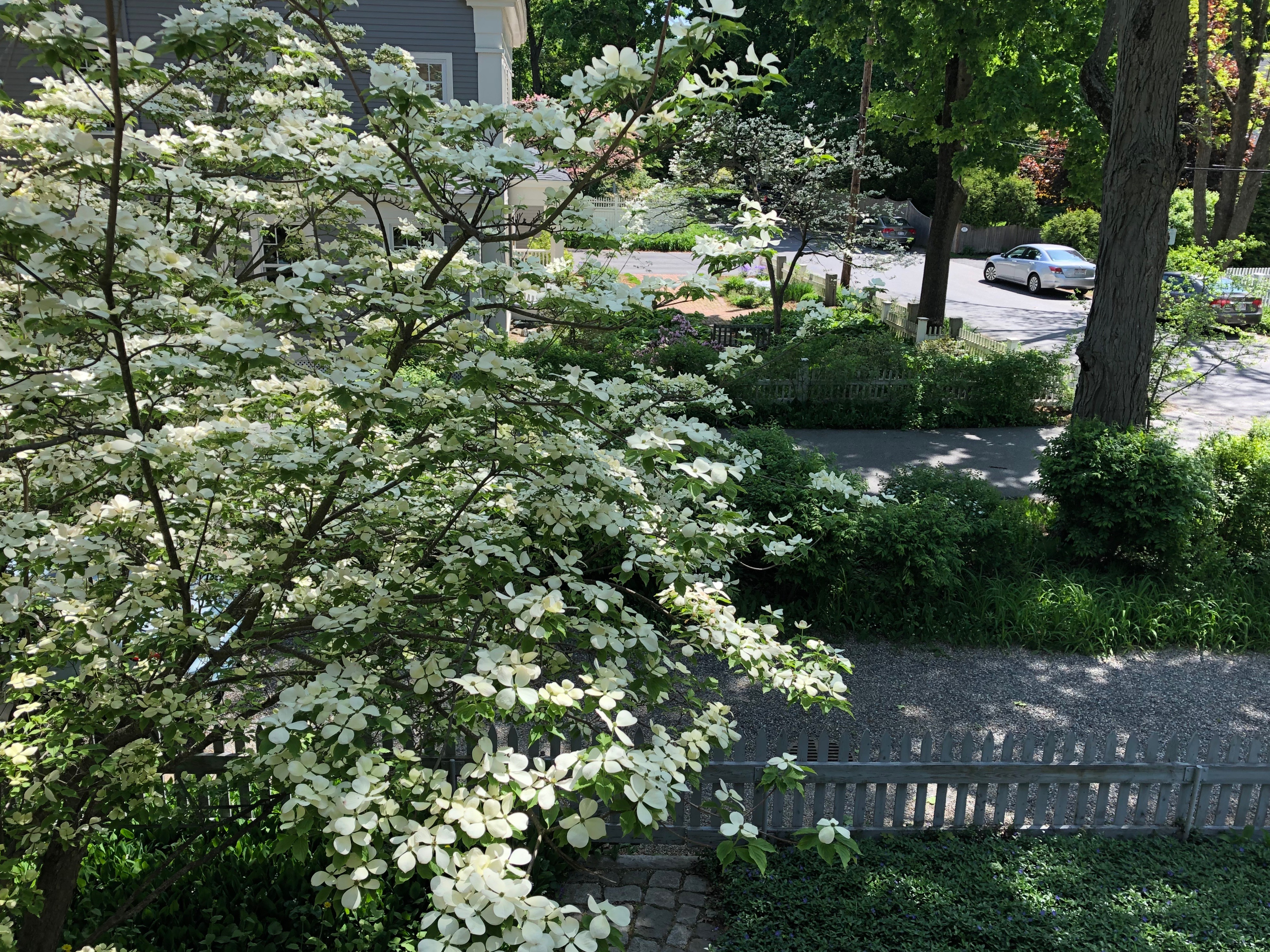 052219-dogwood-see-from-upstairs