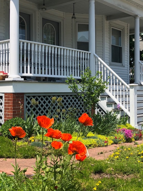 060319-poppies-rhode-island