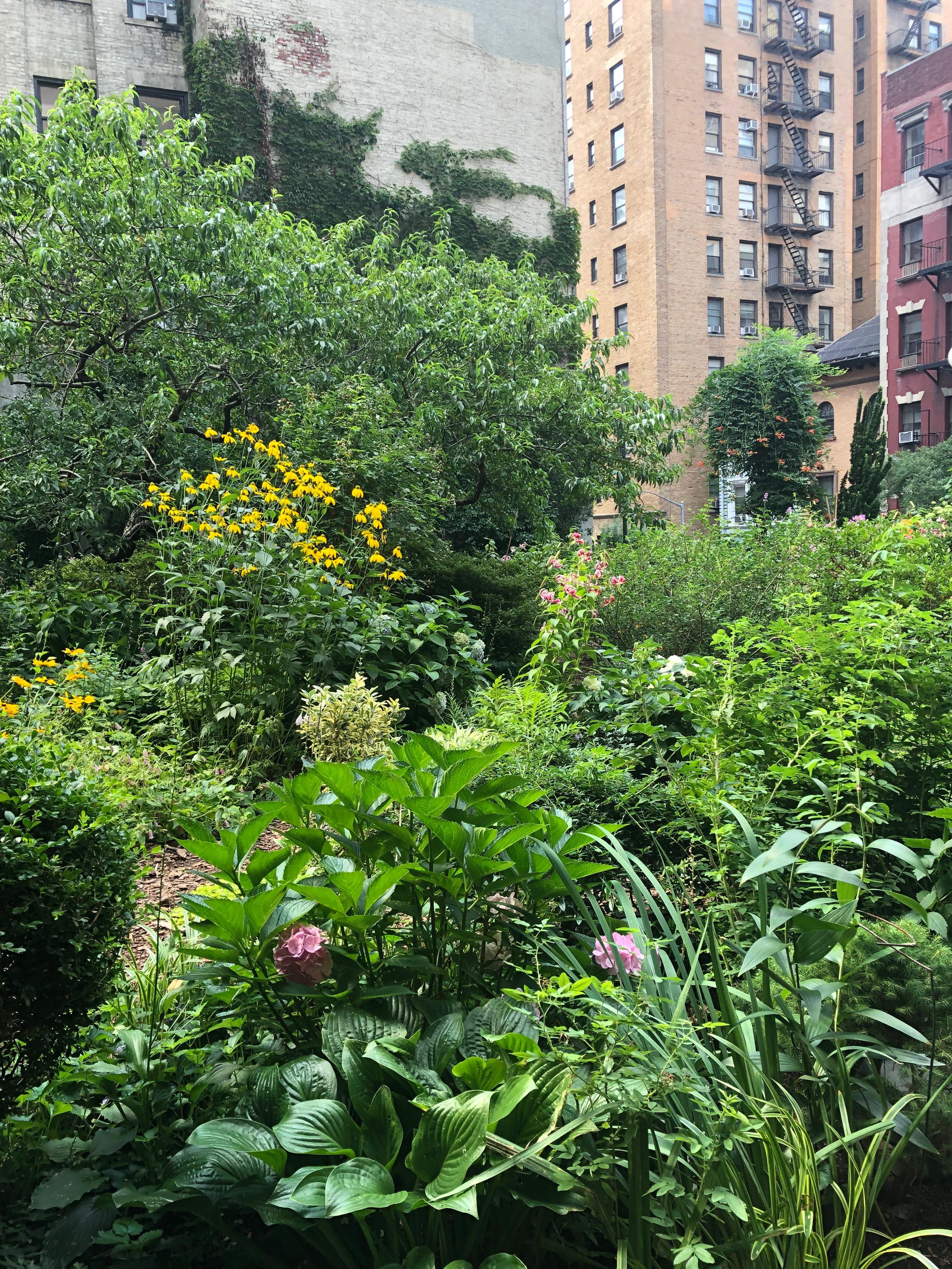 072619-.Lotus-Garden