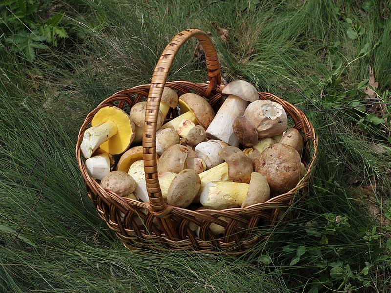 800px-edible_fungi_in_basket_2012_g1