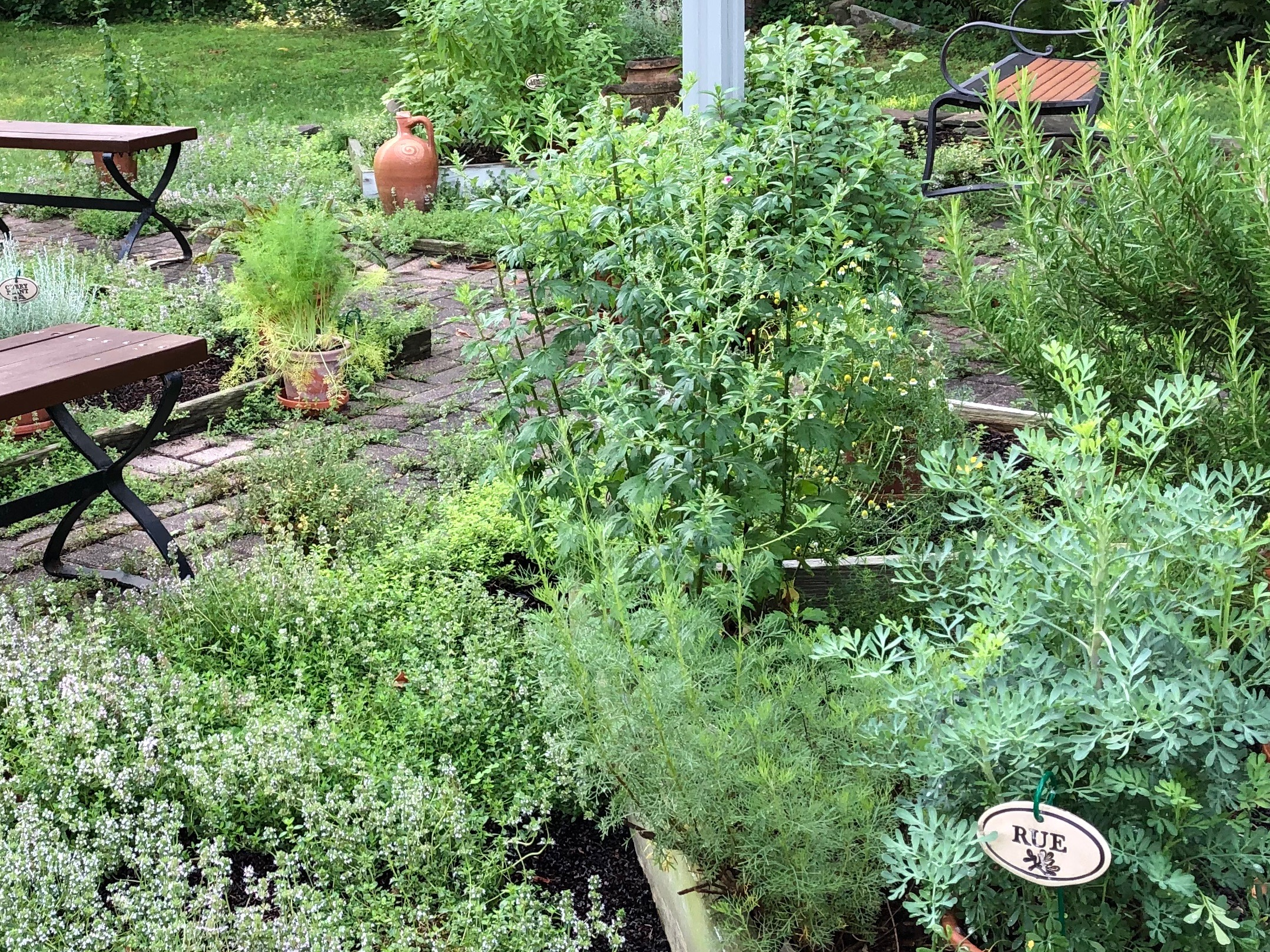 071619-rue-and-other-herbs
