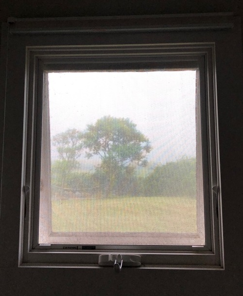 073119-bathroom-window-with-tree
