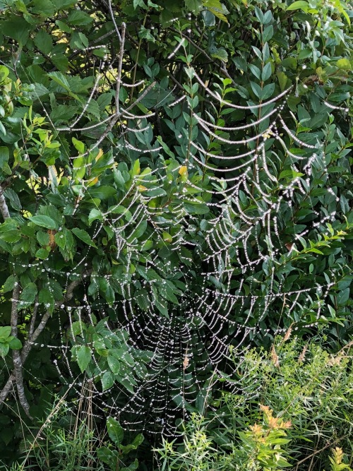 081919-spider-web-jewels