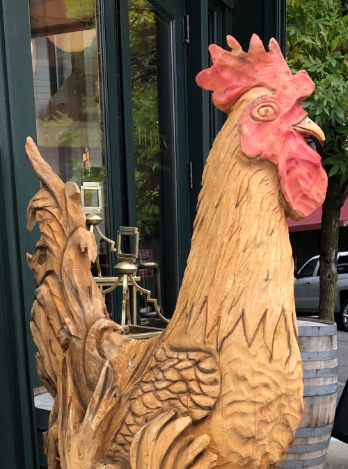 100819-Ellie-rooster-Providence
