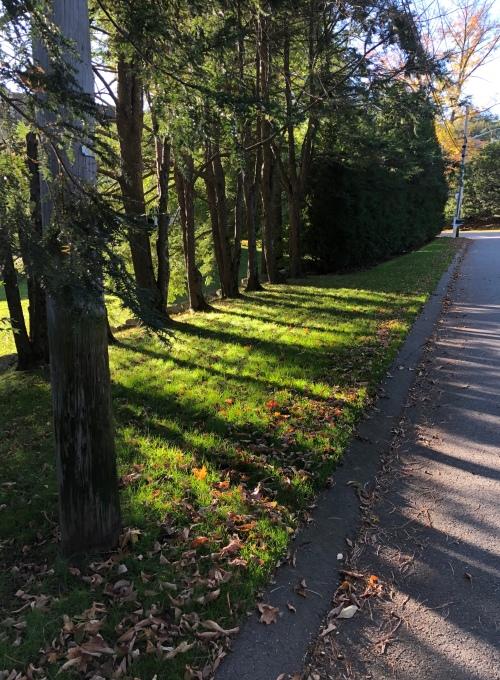 101519-tree-shadows-Concord