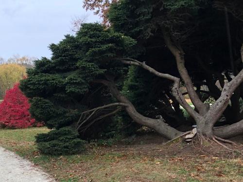 102719-gnarly-tree-North-Bridge