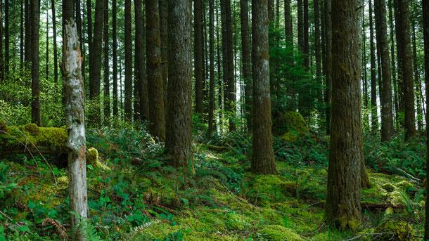 offset_forest