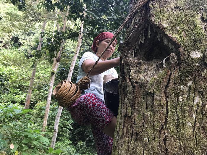 woman_in_tree-1_custom-b0cb07002611909bcf892cd2ef07bc4242501c46-s700-c85