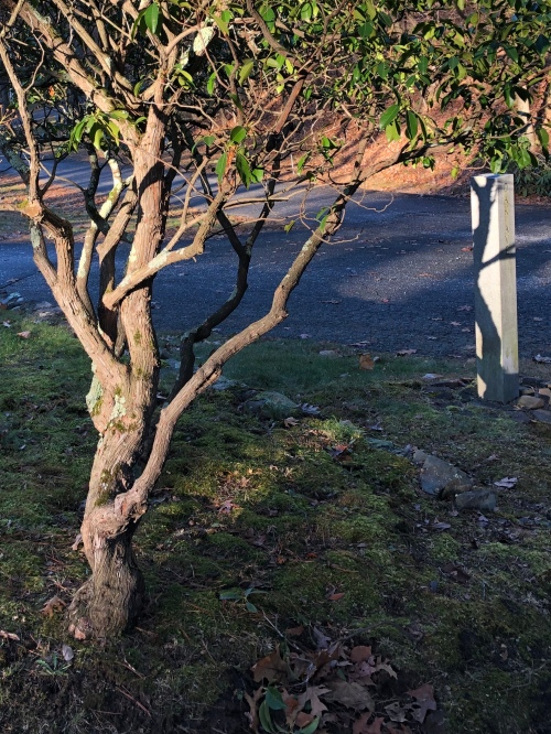 112119-late--afternoon-cemetery-2