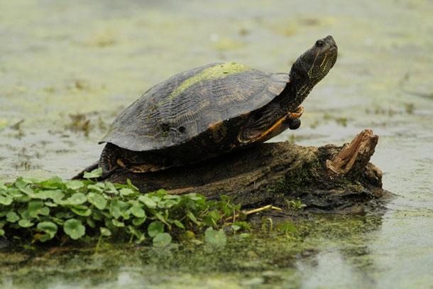 nativestories_turtles