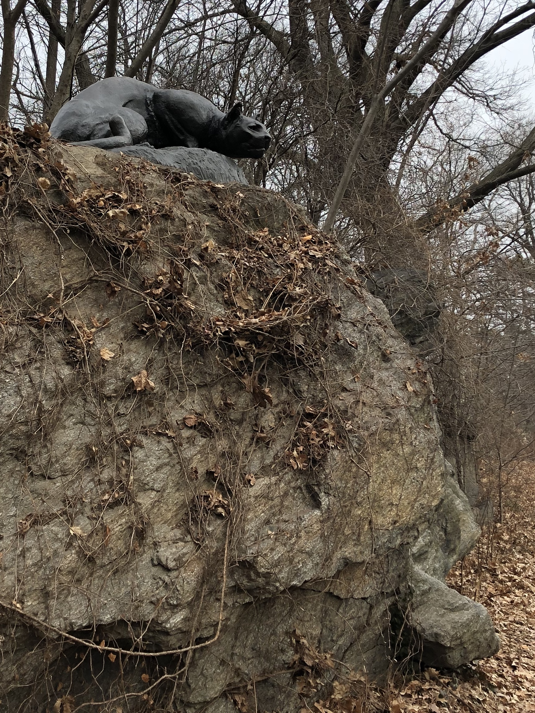 011020-panther-in-Central-Park
