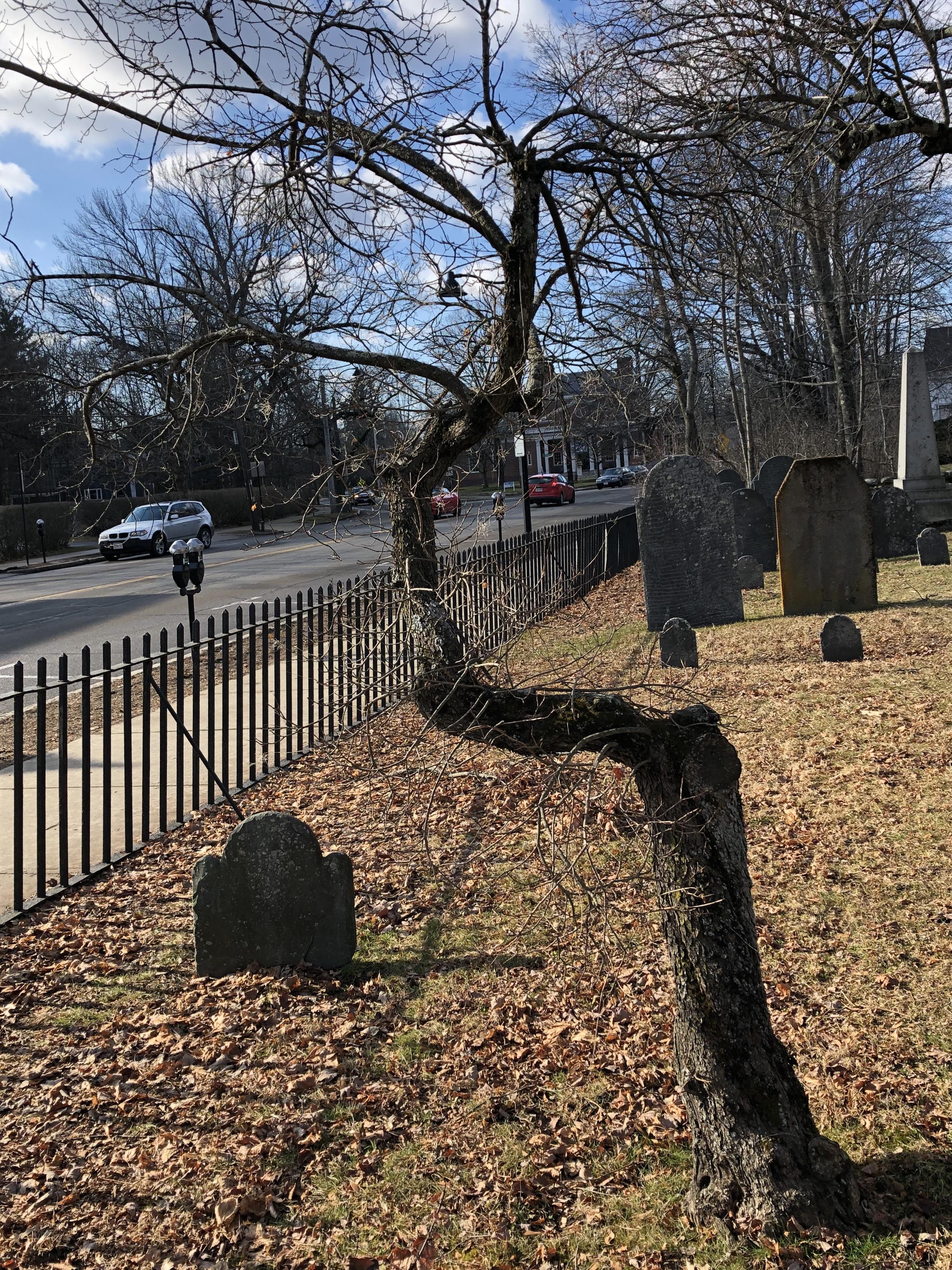 011520-blasted-graveyard-tree