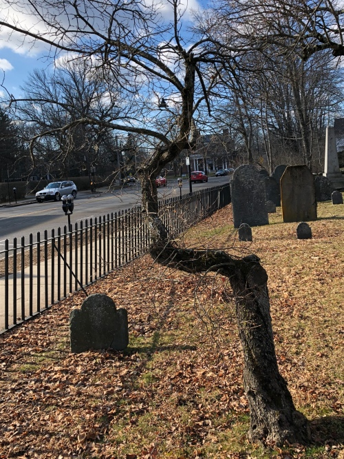 011520-blasted-graveyard-tree