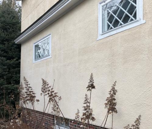 030320-dead-flowers-under-windows