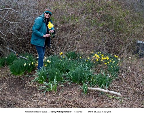 040420-poet-NWG-picks-BI-daffodils