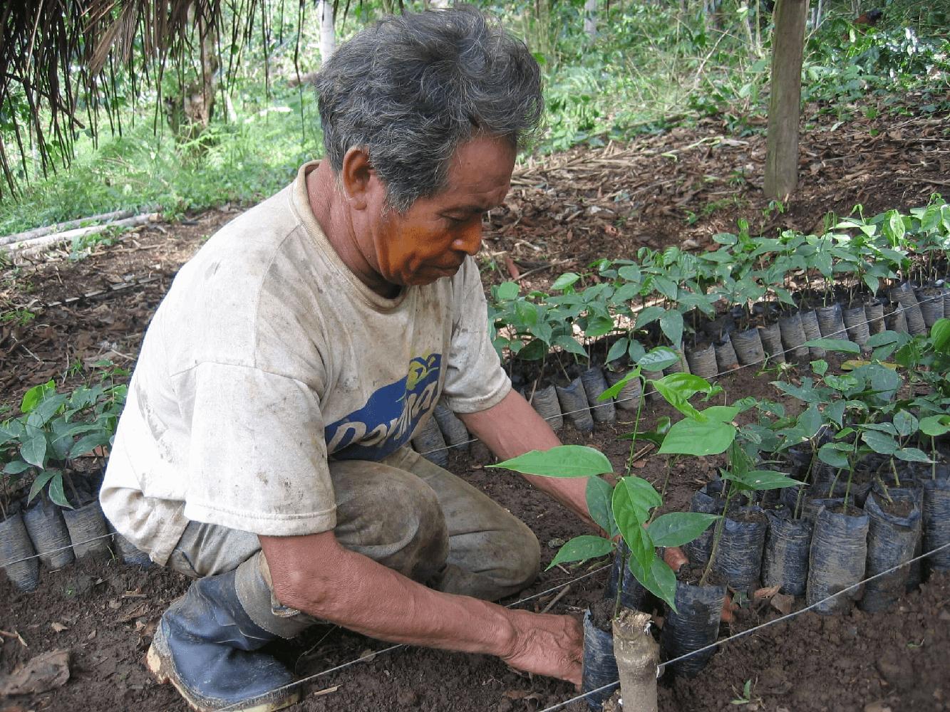 peru_reforest