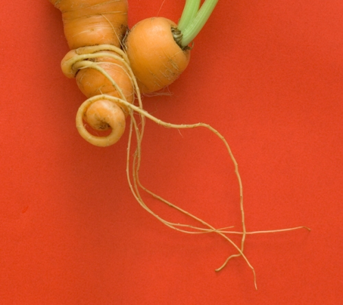 produce_carrot
