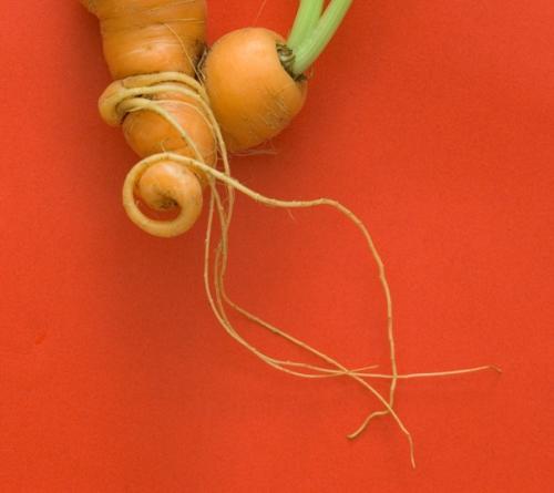produce_carrot