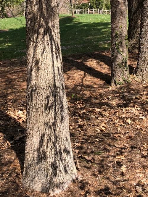 042240-shadow-on-tree