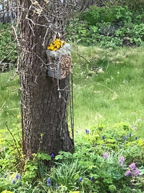 042520-bee-hotel-with-dandelions-Sweden