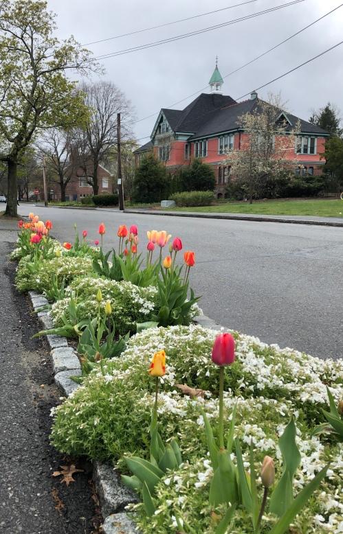 050220-tulips-on-Stow-Street