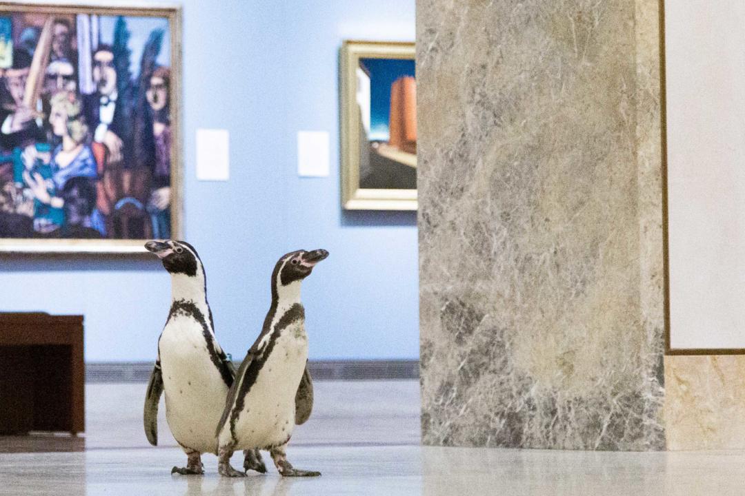 penguins6-1080x720-1