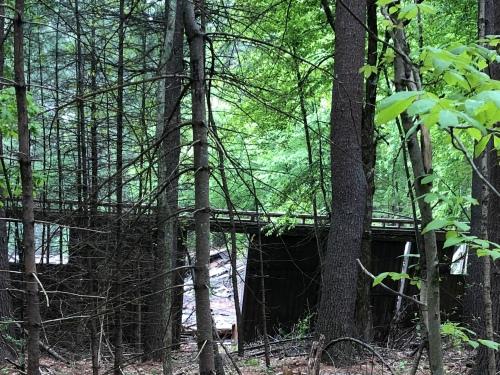 052520-.woodland-mystery