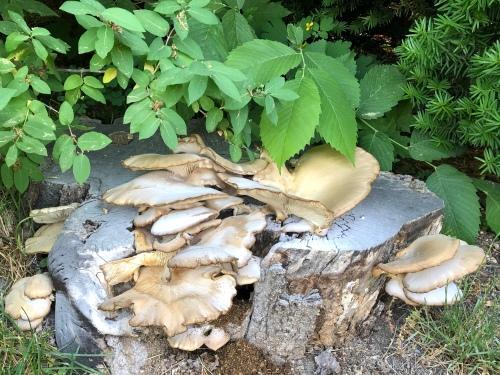 061020-fungus