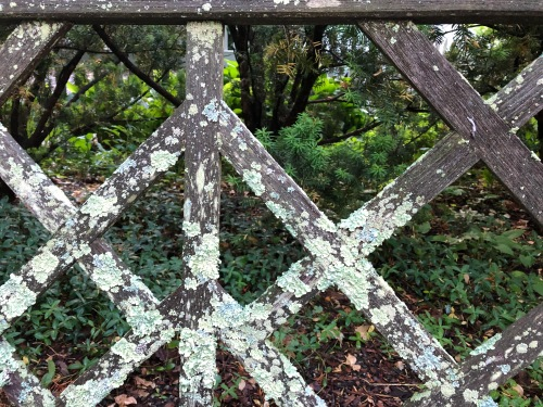 061220-bench-with-lichen