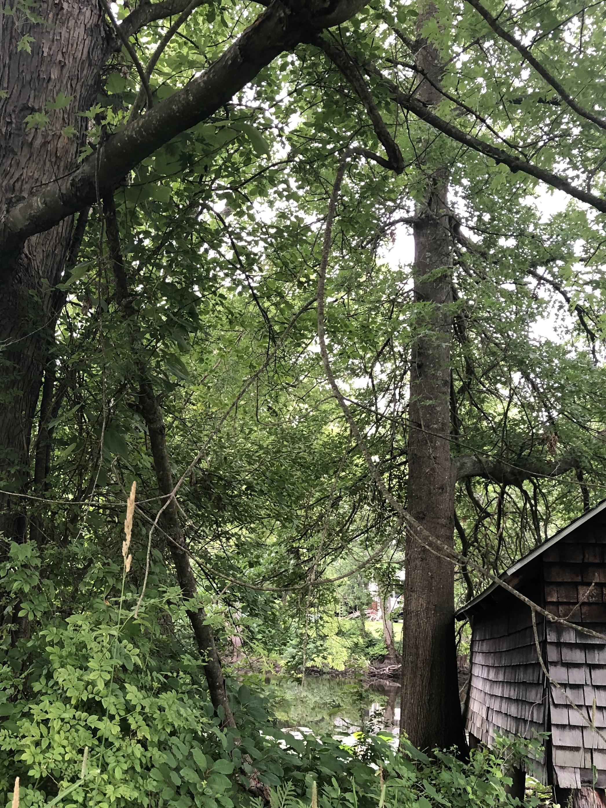 071020-river-shack