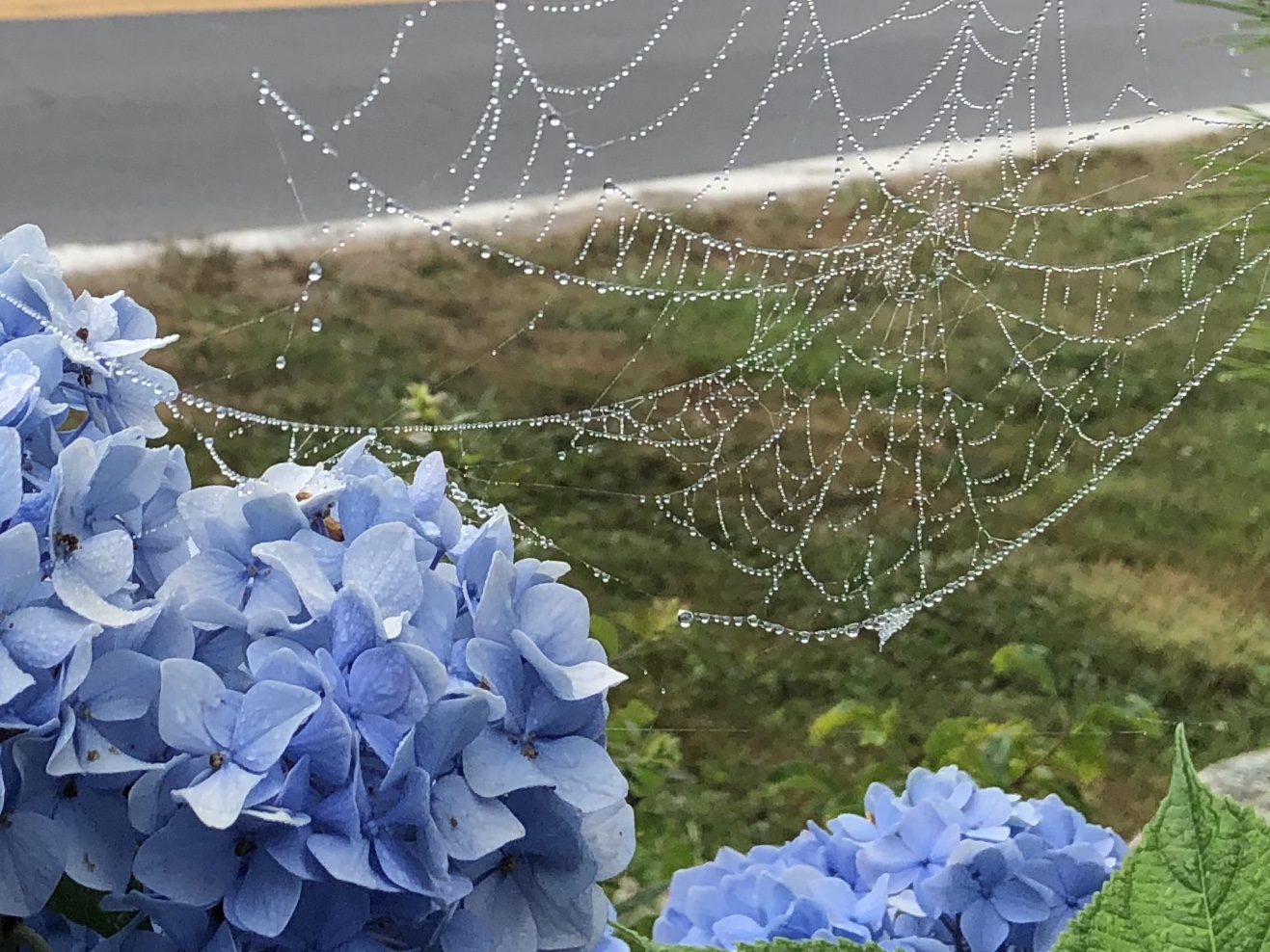 071920-spider-web-jewels
